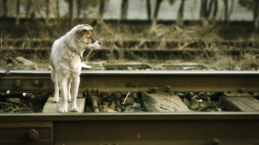 В София продължават да се изхвърлят домашни кучета