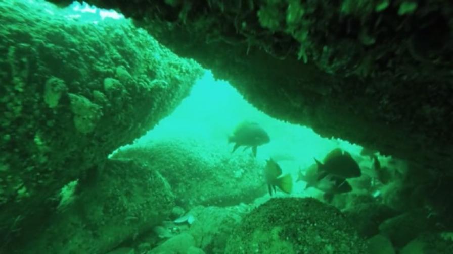 Къде да се гмуркаме по Южното Черноморие? (видео)