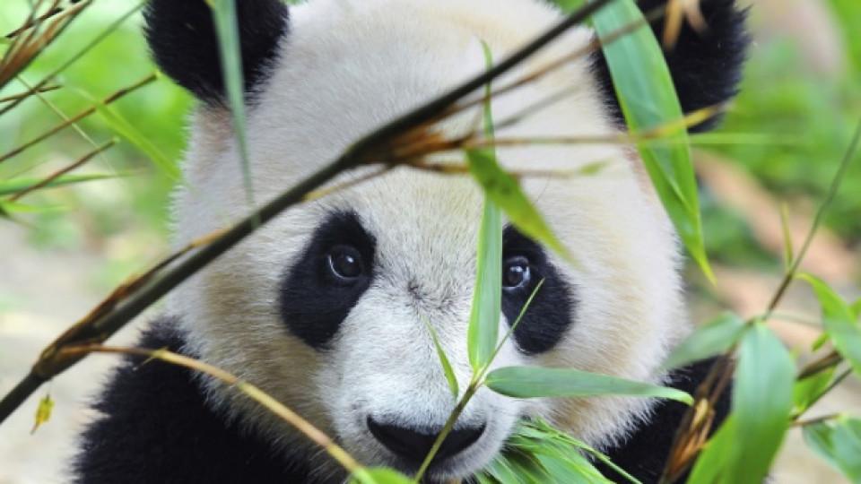 Любопитни факти за животните, които не сте чували досега