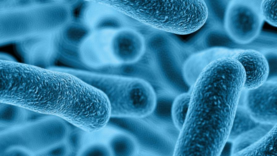Антибиотик в пръстта убива смъртоносните бактерии