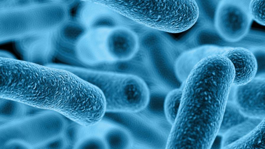 <p>Учени алармират: Трябва ни &quot;Ноев ковчег&quot; за микробите</p>