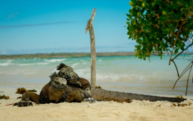 Галапагос галапагоски острови
