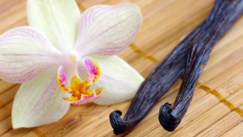 Орхидеята, която е подправка