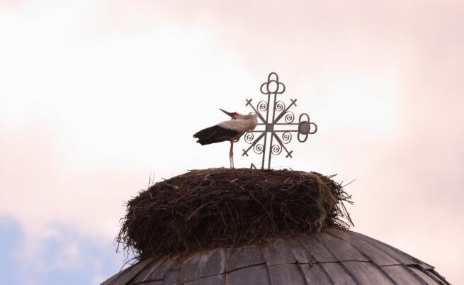 Белите щъркели в България се увеличават