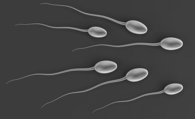 Революционно: създадоха сперматозоиди от кожни клетки