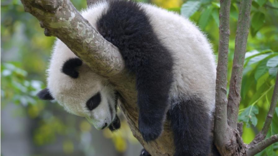 Учени: Страдаме от глобална криза на съня