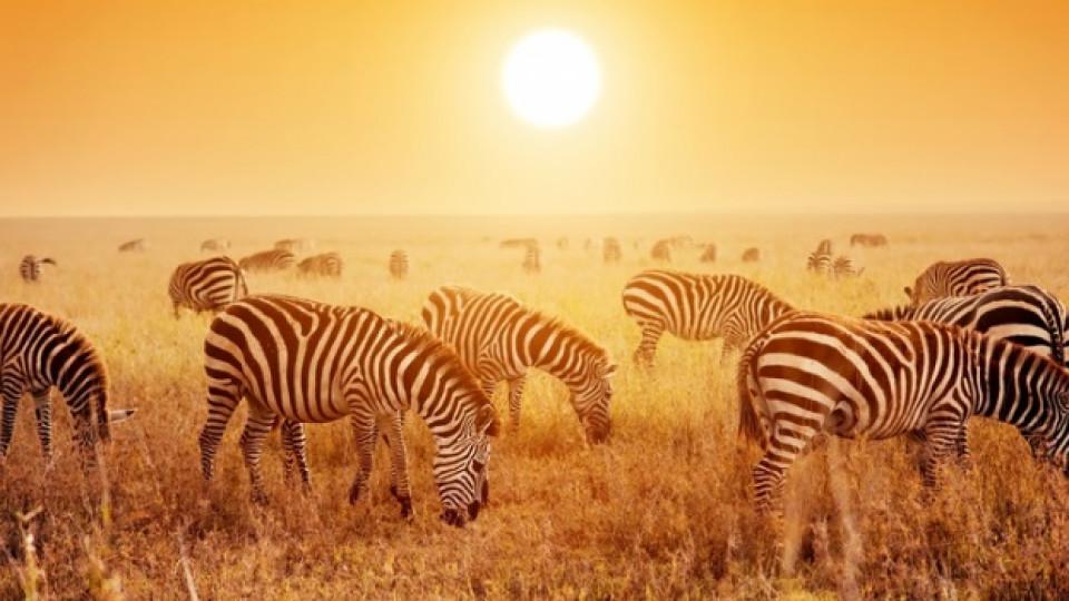 Африка, мой втори дом...