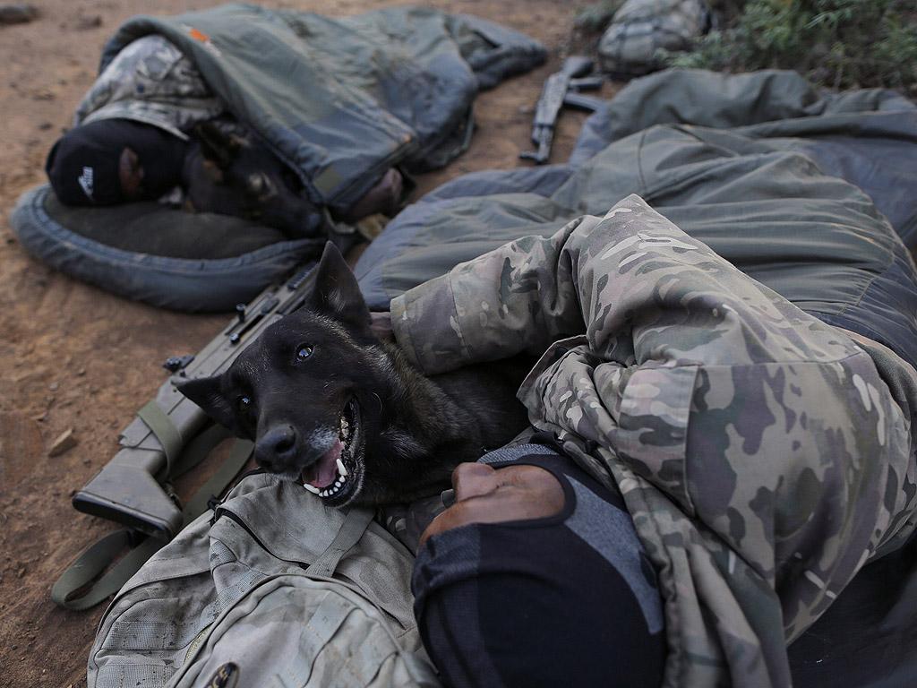 Кучета са част от пеши патрули за срок до три дни, носят специални военни маскировачни костюми. Кучето и патрула споделят един спален чувал през нощта.