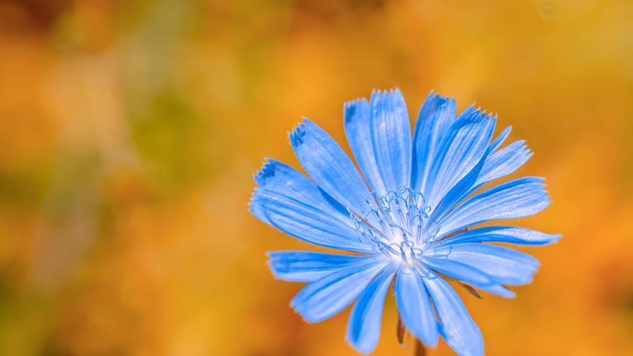 Цветето, от което отслабваме и се радваме на здрава кожа