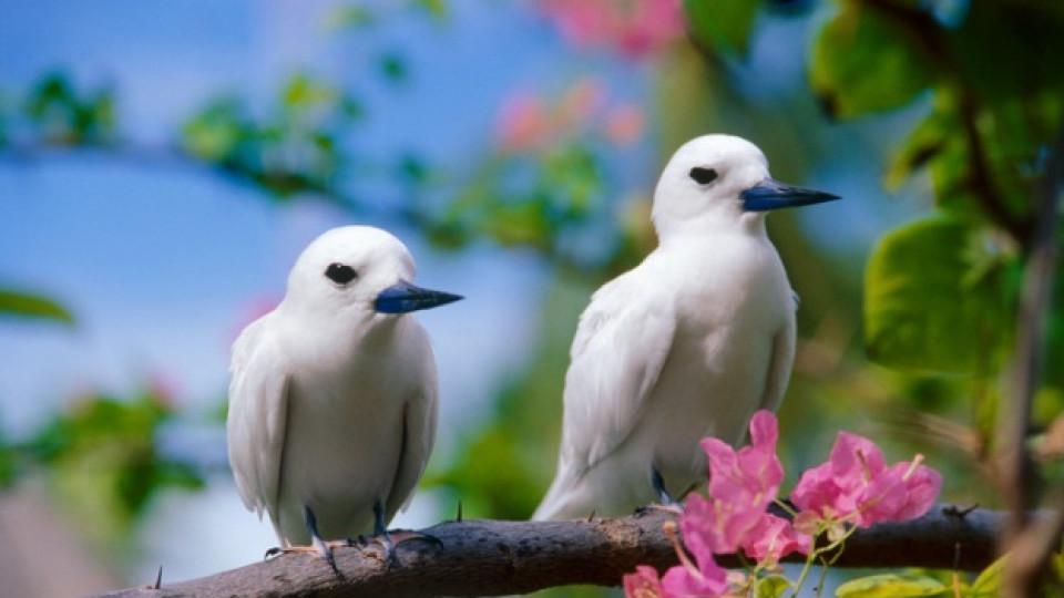 Чуруликащи птички