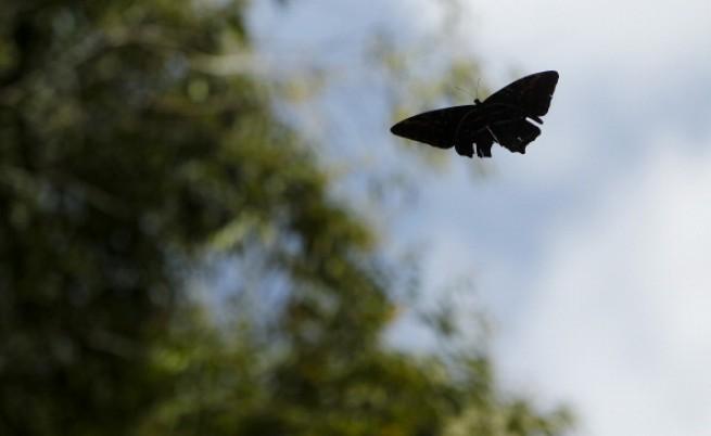 Броят на летящите насекоми пада с 75% за 30 години