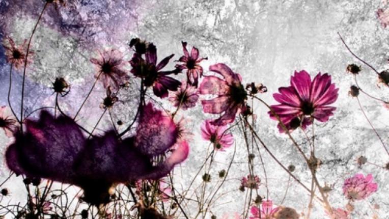 цветя главна