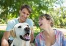 Кучето може да ви помогне да си намерите гадже