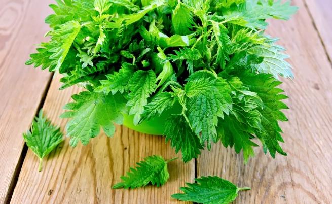 Зелените листенца, които парят, но притежават лечебна мощ