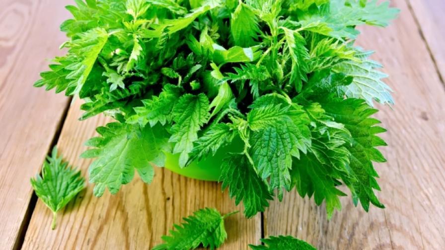 Зелените листенца, които парят, но имат лечебна сила