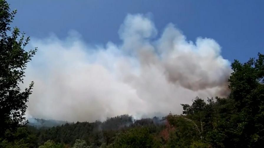 Властите: Пожарът в Ардино е заграден по целия периметър