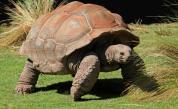 7 животни, които могат да живеят над 100 години