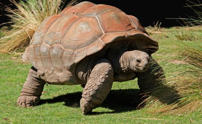Най-дълголетните животни на планетата