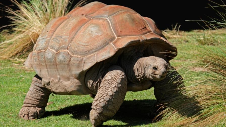 <p>Животни, които&nbsp;живеят над 100 години. За много от тях не сте чували</p>