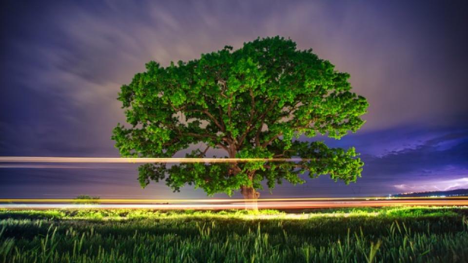 Какво символизира всяко дърво, посадено в двора ни