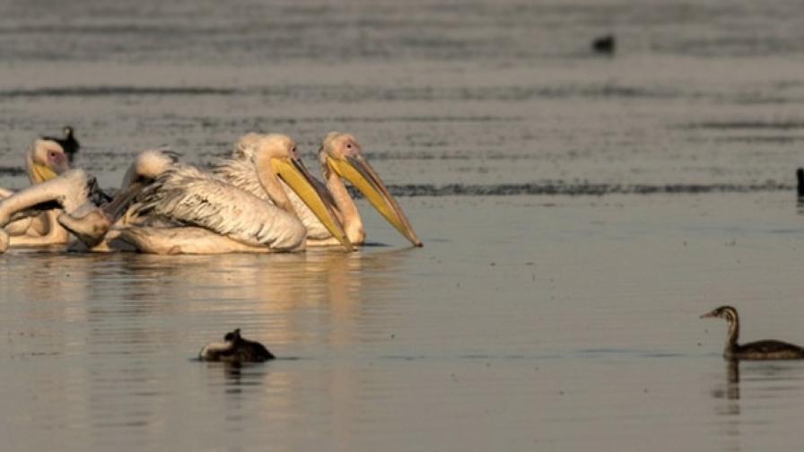 Вая - най-голямото естествено езеро у нас