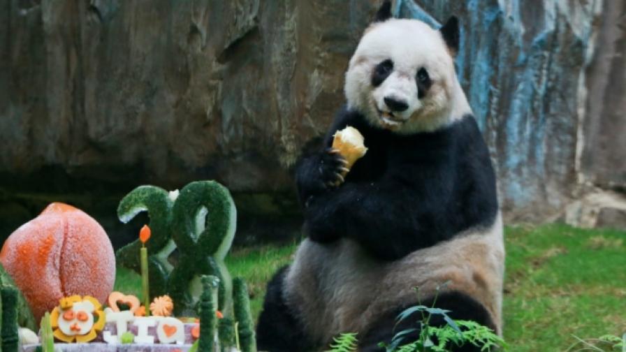Почина най-старата панда в света