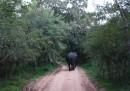 """Екипът на """"Без багаж"""" преживя нападение от слон"""