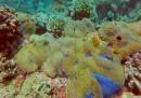 Мъртвите рифове се съживяват
