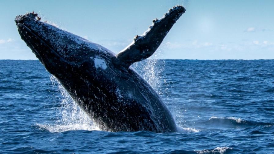 Изненада в САЩ, кит плува до Статуята на свободата (видео)
