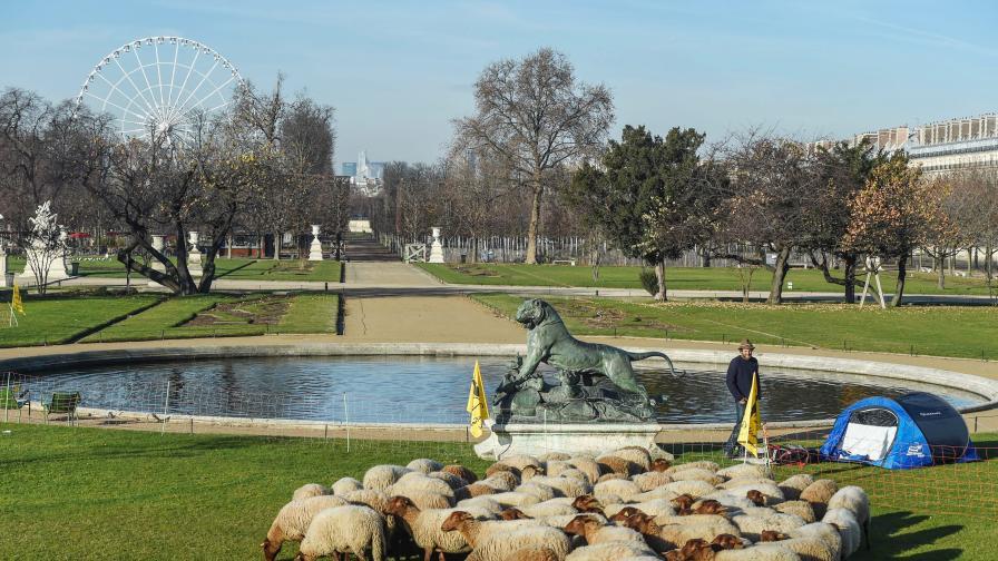Невиждано край Лувъра: Овце на паша