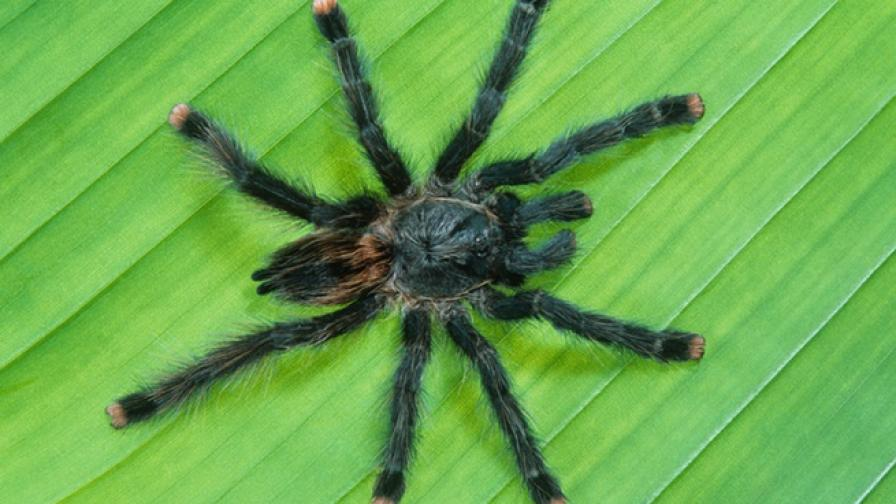 Изумителни факти за паяците, доказващи колко са ни нужни