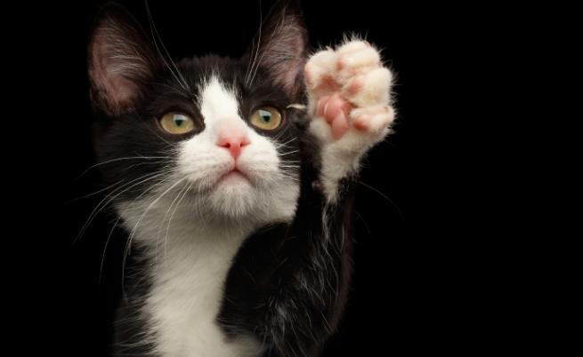 Проучване: Котките разпознават собственото си име