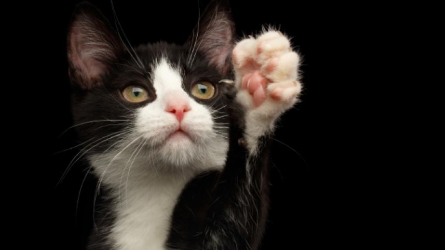 <p><strong>Проучване:</strong> Котките разпознават собственото си име</p>