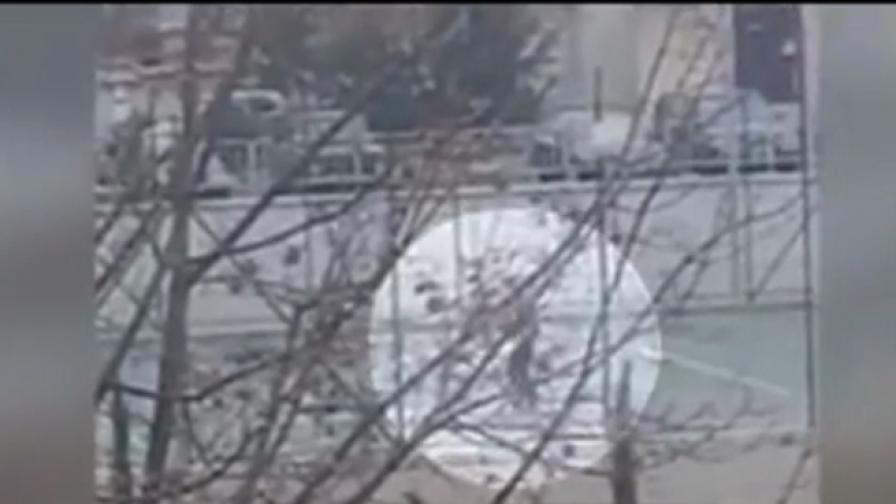 Показно обесиха куче в Козлодуй, стоя на въжето
