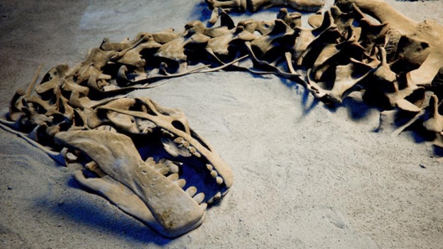 Откриха фосили на бременно влечуго на 245 млн. години