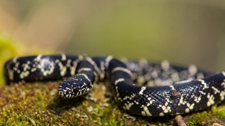 Мъж уби с голи ръце змия във влак в Индонезия (ВИДЕО)