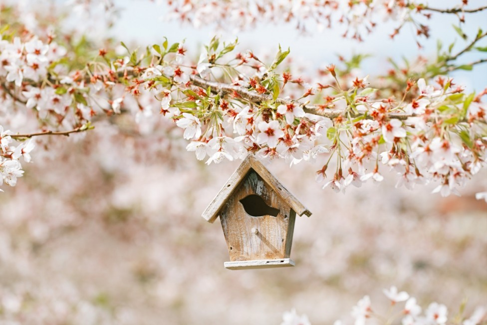 - Астрономическата пролет в Северното полукълбо тази година настъпва на 20 март в 12.28 ч. българско време. Това е и денят на пролетното равноденствие...