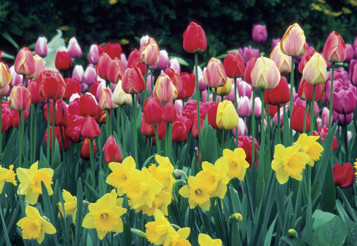 Астрономическата пролет в Северното полукълбо тази година настъпва на 20 март в 12.28 ч. българско време. Това е и денят на пролетното равноденствие, когато продължителността на деня е равна на нощта.