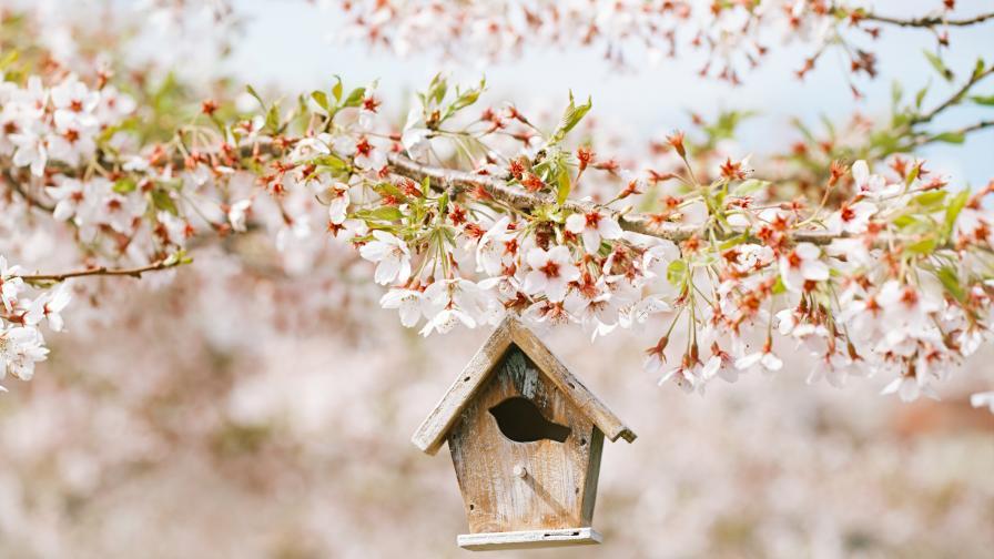 Направете тези неща точно през пролетта