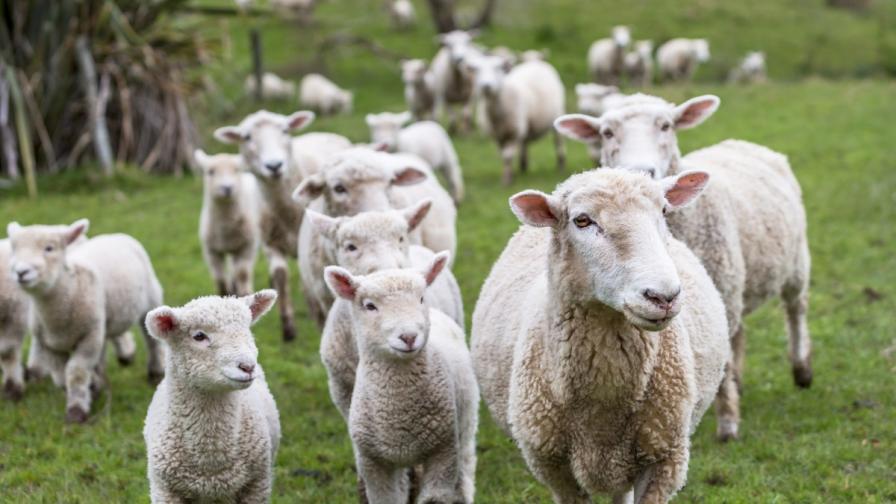 Фермер: Не разрешавам втора проба от животните