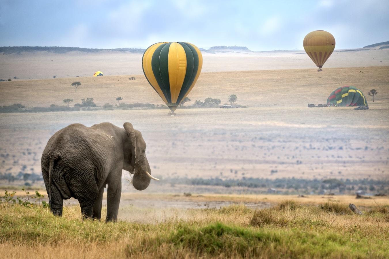 Стрелец<br /> <br /> Представителите на тази зодия винаги копнеят за приключение и искат предложение, което да е вълнуващо. Заведете я в Кения, Африка и се насладете на нова култура и съвсем различни пейзажи. Наемете балон с горещ въздух и докато прекосявате саваната паднете на едно коляно и ѝ направете предложение.