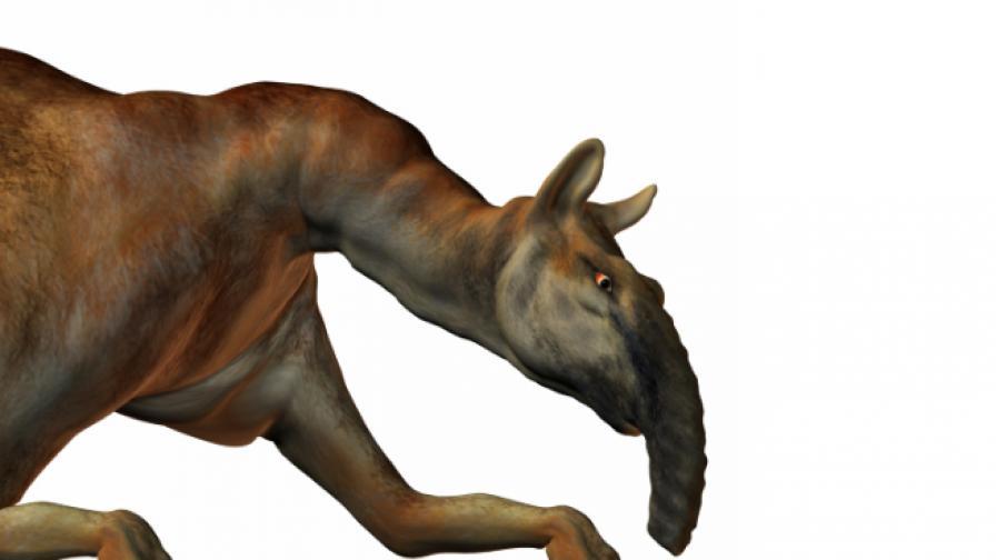 Учени с ДНК от най-странното животно, открито от Дарвин