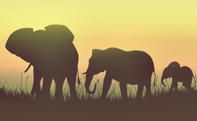 Вкаменелости свидетелстват, че е имало слонове гиганти