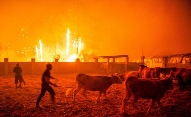 Горски пожари в средата на октомври опостушиха огромни горски и селищни площи и взеха десетки жертви в Португалия