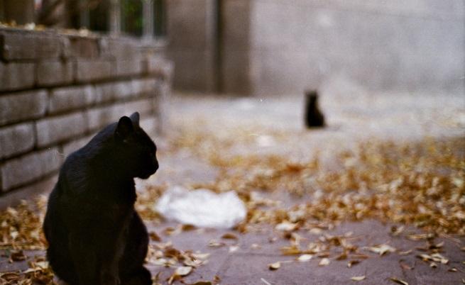 Котките на София и техният свят