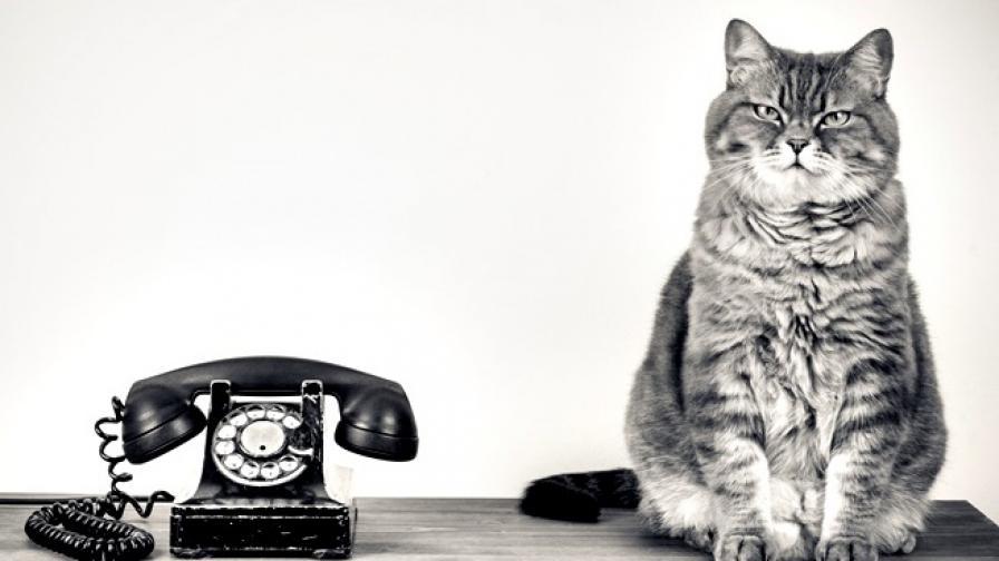 Как двама учени превръщат жива котка в телефон