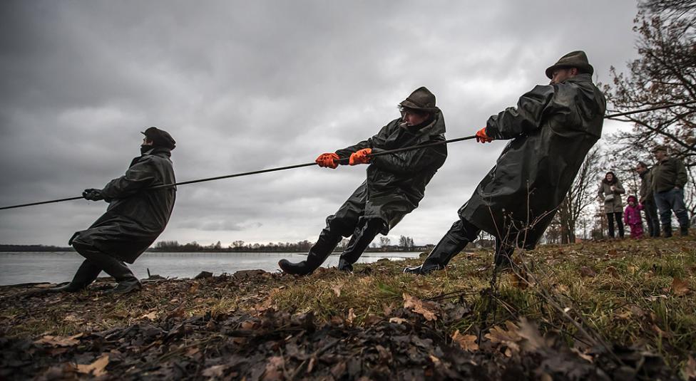 - Рибари издърпват пълна мрежа по време на традиционния улов на шаран в Босилеското езеро близо до южнобохемския град Требон, Чехия