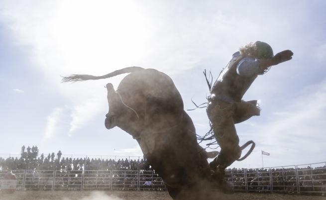 Участник в обяздване на бикове