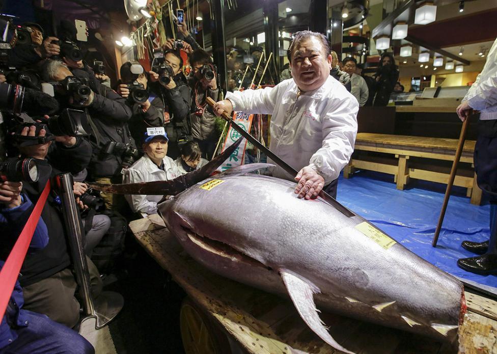 - Червен тон с тегло 405 кг, който бе основният лот на рибния търг на прочутия пазар за морски дарове в Токио Цукиджи, беше продаден на първия...