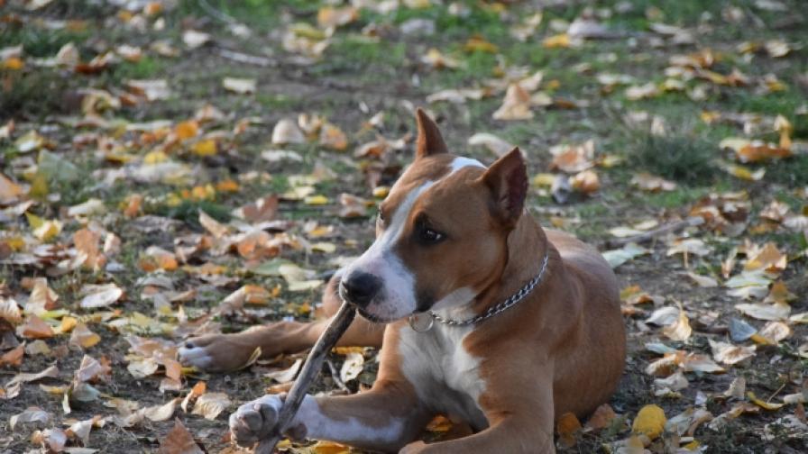 Полицията: Куче убило майка и сина ѝ в Германия